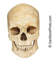 skeleton skull bones - close up of a skeleton on white...