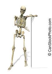 Skeleton Standing Beside Sign or Border