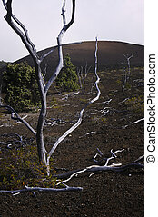 Skeleton Trees & Lava Field, Hawaii