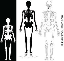 skeleton vector silhouettes