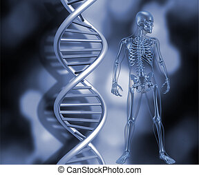 3D render of a medical skeleton stood next to DNA strands