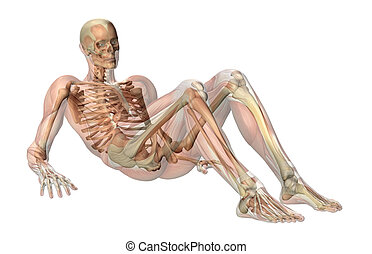 A male skeleton with semi-transparent muscles, laying on the floor, knees bent, propped up on his elbows.