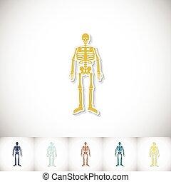 skeleton., wohnung, hintergrund, aufkleber, menschliche , schatten, weißes