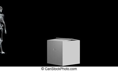 skeleton01, rentgenowski
