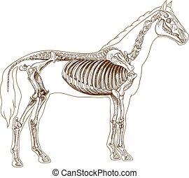 skelett, gravyr, häst