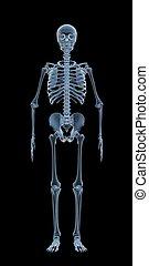 skelett, röntgenaufnahme