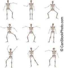 skelett, rörelse, vektor, olika, mänsklig, ge sig sken