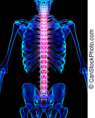 skelett, rückgrat, 3d, röntgenaufnahme, schmerzhaft, illustration.