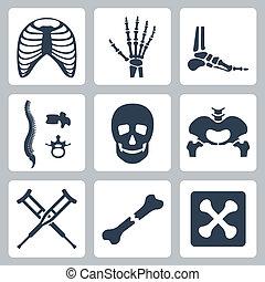 skelett, vektor, sätta, isolerat, ikonen