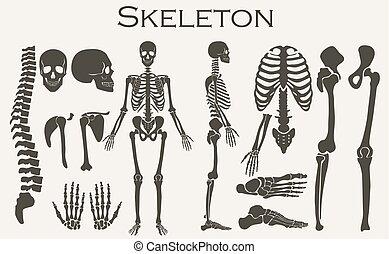 skelett, vektor, silhuett, hög, mänsklig, kollektion, detaljerad, set., illustration., knotor