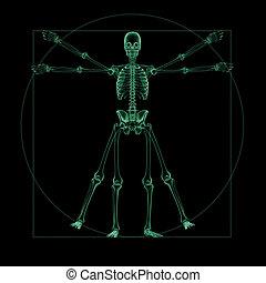 skelettartig, vitruvian, röntgenaufnahme, mann