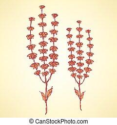 Sketch basil herb in vintage style, vector