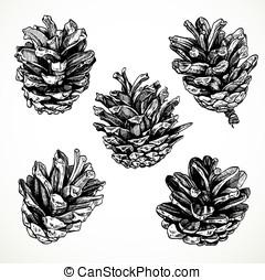 Sketch drawing pine cones