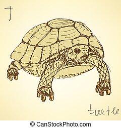 Sketch fancy turtle in vintage style, vector