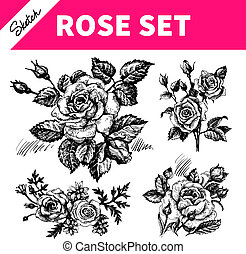 Sketch floral set. Hand drawn illustrations of roses