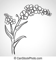 Sketch forget-me-not (Myosotis), hand drawn, ink style
