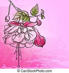 Sketch  Fuchsia background