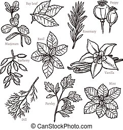 Sketch Herbs And Spice Collection