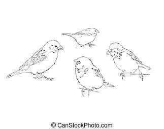 sketch illustration of 4 sparrows