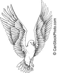 Sketch illustration of a soaring eagle