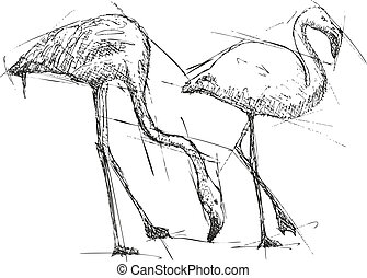 Sketch illustration of flamingos