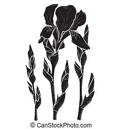 Sketch  iris flowers