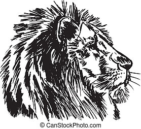 Sketch of a big male African lion. Vector illustration