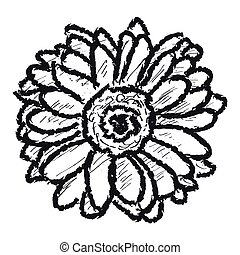 Sketch of a daisy flower on a white backgroound