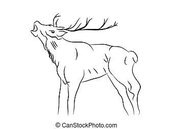 sketch of a deer