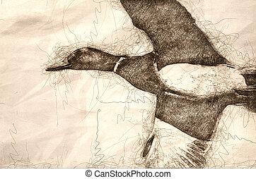 Sketch of a Mallard Duck in Flight