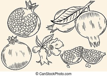 Sketch of a pomegranate. A set of whole fruits, half fruits with berries. Branch with fruits and flowers, vector freehand drawing. Black lines.
