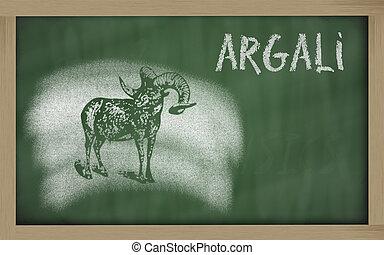 sketch of argali on blackboard (Ovis ammon) - Ovis ammon...