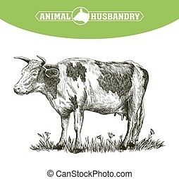 sketch of cow drawn by hand. livestock. cattle. animal ...