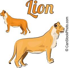 Sketch of female lion.