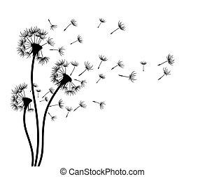 Sketch of field dandelions.
