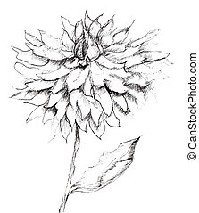 Sketch of flower