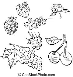 Sketch of fruit