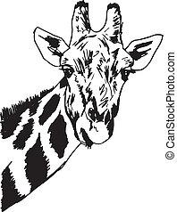 Sketch of giraffe head. Vector illustration