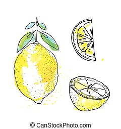 Sketch of lemon in ink, watercolor style