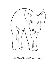 Sketch of pig, Hand drawn vector illustration isolated on...