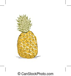 Sketch of pineapple for your design