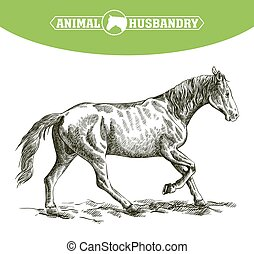 sketch of running horse drawn by hand. livestock. animal grazing