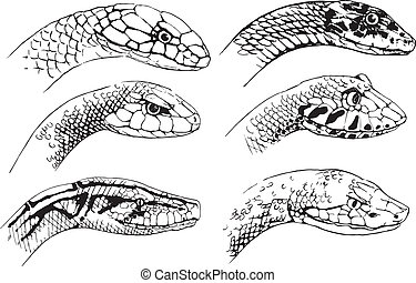 Illustration of the sketch of snakes on a white background
