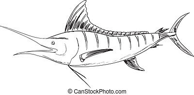 Atlantic  - Sketch of the Atlantic blue marlin