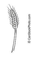 sketch of the barley