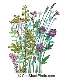 Sketch of the wildflowers on a white background. Hand drawn...
