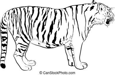 Sketch of tiger.