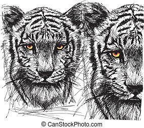 Sketch of white tiger