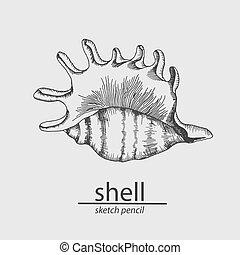 sketch., resident., vector, mar, shell., marina