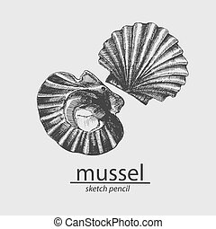 sketch., resident., vector, mussel., mar, marina